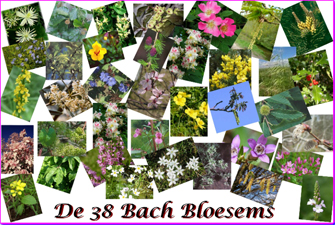 bach bloesems 38