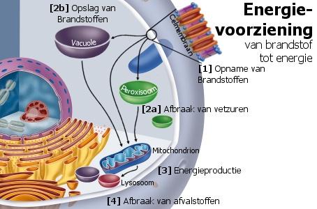energievoorzoorziening
